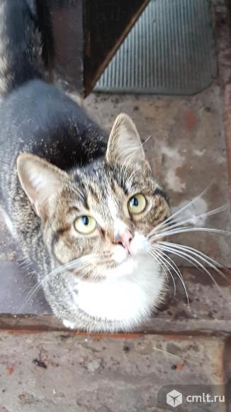 Котенок Гарфилд ищет дом. Фото 5.