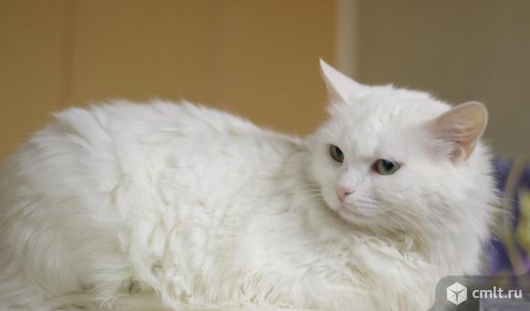 Кошечка Саяна ищет дом. Фото 2.