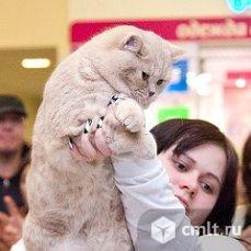 Вязка кота. Фото 1.