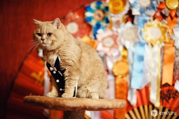 Вязка кота. Фото 3.
