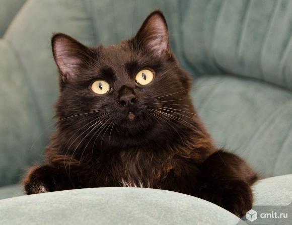 Ласковый и добрый кот Чернышевский. Фото 1.