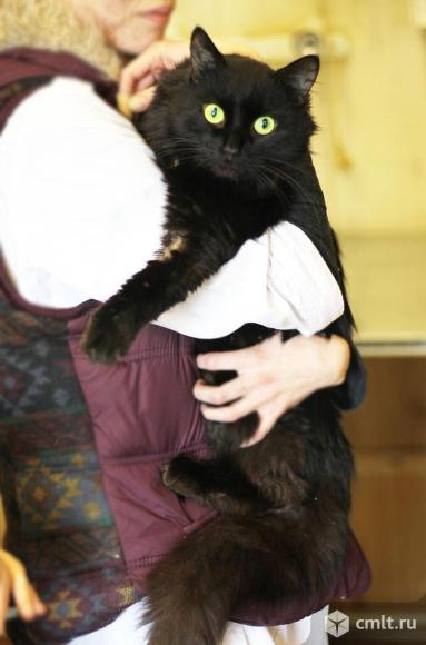 Ласковый и добрый кот Чернышевский. Фото 3.