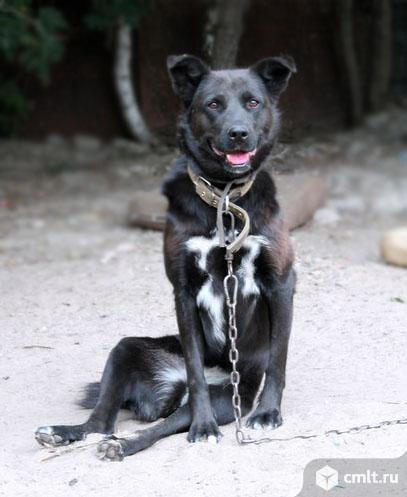 Особенная собачка Жуля. Фото 1.