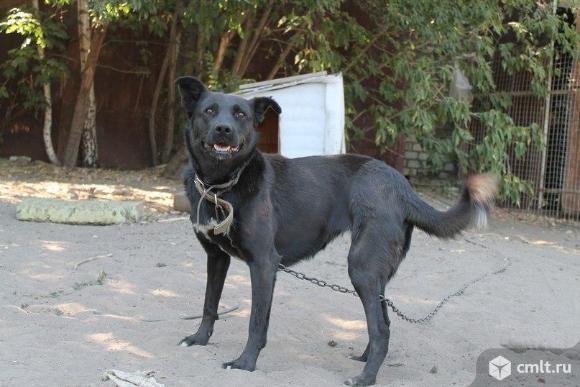 Особенная собачка Жуля. Фото 3.