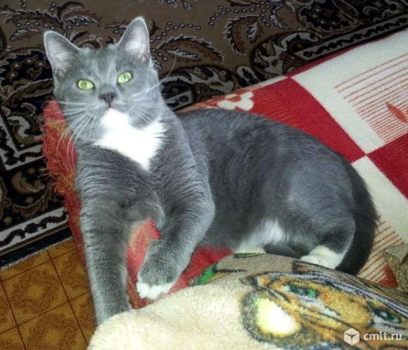 Кот Алекс ищет дом.. Фото 1.