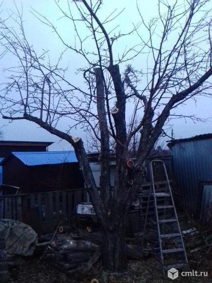 Спиливание деревьев любой сложности. Фото 7.