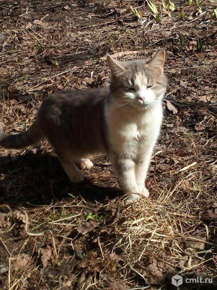 Котику Кузе нужен дом. Фото 1.