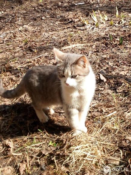 Котику Кузе нужен дом. Фото 3.