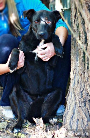 Собака с большим добрым сердцем- Чернушка!. Фото 3.