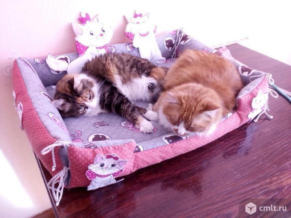 Кот и кошка. Фото 1.