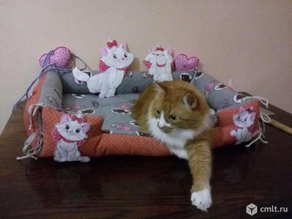Кот и кошка. Фото 2.