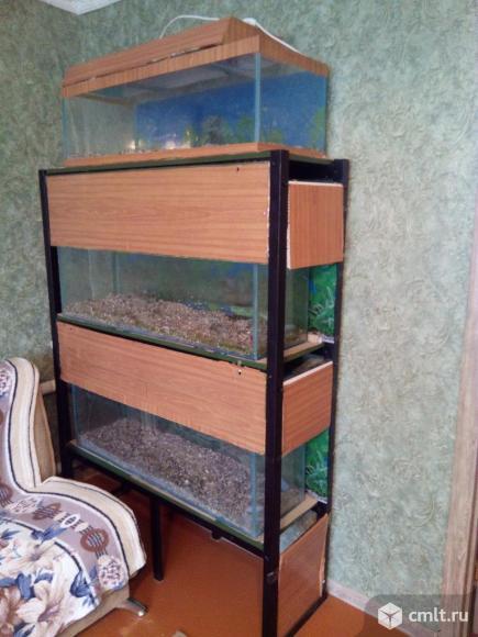 Стеллаж с аквариумами. Фото 1.