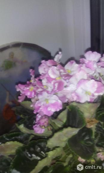 Комнатные растения. Фото 3.