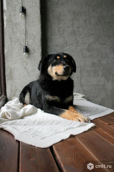 Уникальная собака Герда. Фото 3.