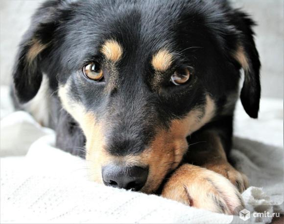Уникальная собака Герда. Фото 1.