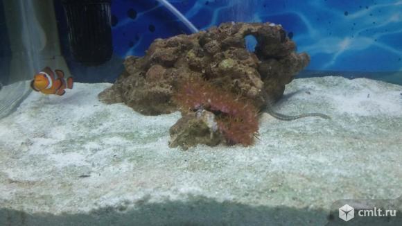 Морской Аквариум. Фото 3.