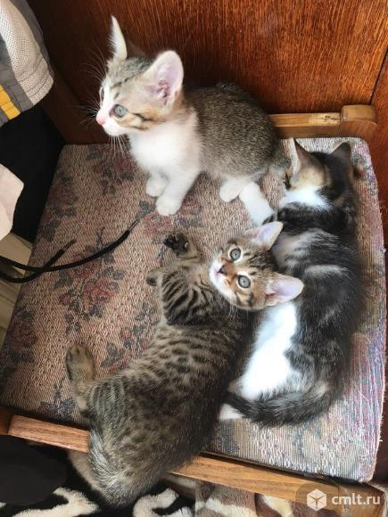 Котята в хорошие руки. Фото 10.