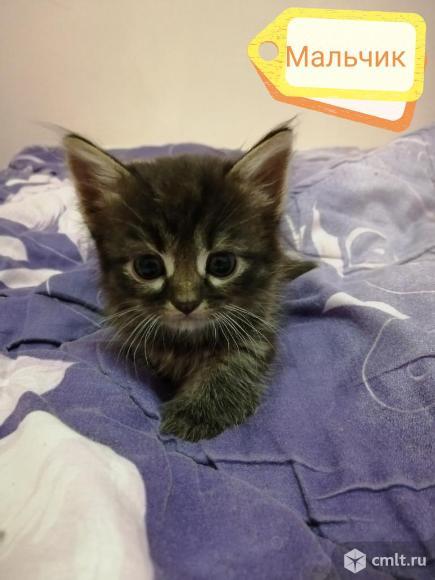 Домашние котята. Фото 10.