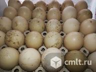 Яйца куриные и утиные. Фото 5.