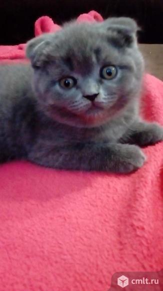 Кошечка. Фото 10.