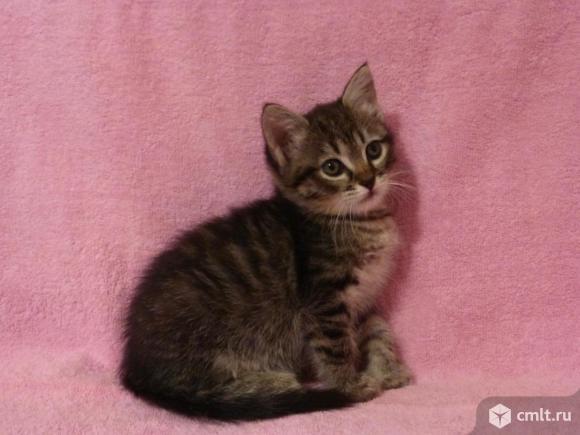 Замечательные котята. Фото 1.