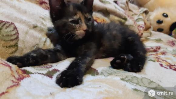 Котёнок в хорошие руки. Фото 1.