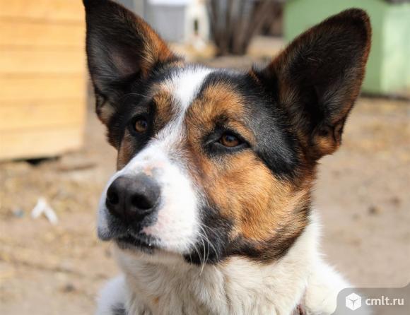 Красивая собака в дар. Фото 1.