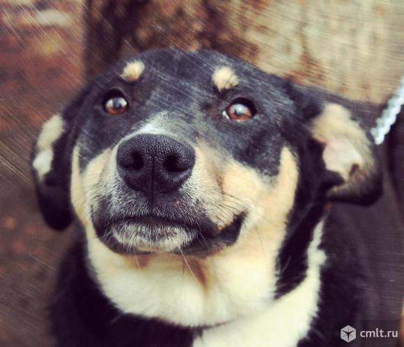 Красивая собака в дар. Фото 4.