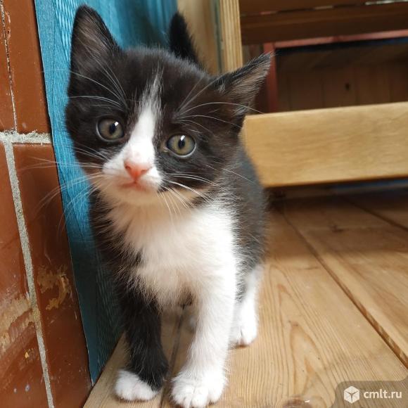Кошечки в добрые руки. Фото 2.