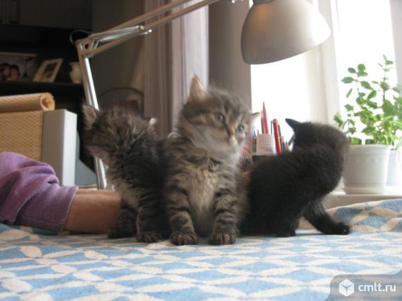 Пасхальный котенок. Фото 1.