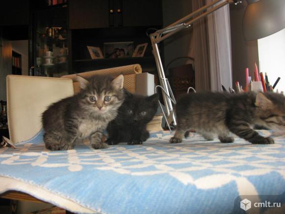 Пасхальный котенок. Фото 5.