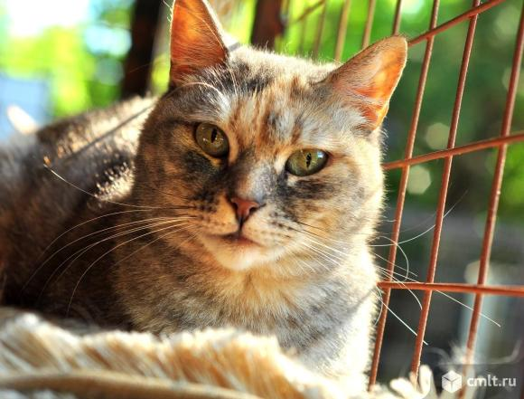 Нежной кошке Марусе нужен дом. Фото 1.