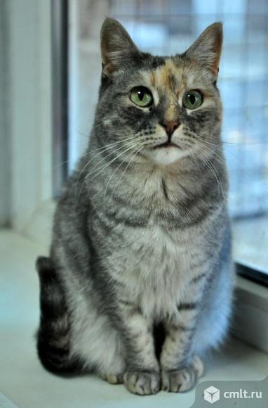 Нежной кошке Марусе нужен дом. Фото 2.