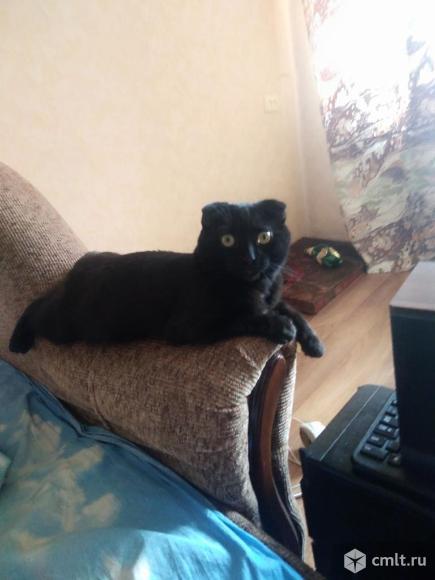 Отдам в дар котенка. Фото 1.