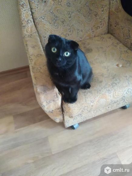 Отдам в дар котенка. Фото 3.