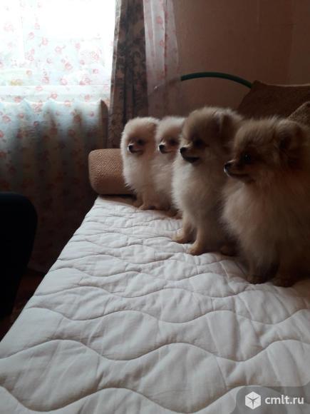 Мини мишки. Фото 3.