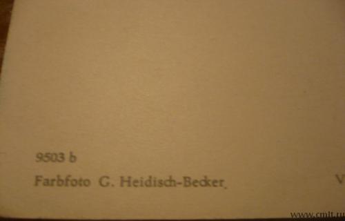 Старая открытка. Радостного Рождества и счастливого Нового года. Germany [Германия].. Фото 6.