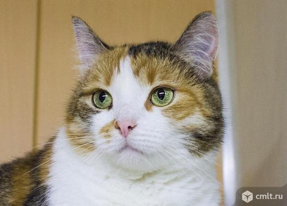 Прекрасная кошка Мила. Фото 1.