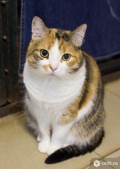 Прекрасная кошка Мила. Фото 4.