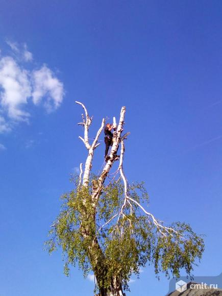 Спиливание деревьев любой сложности, расчистка участков. Фото 1.