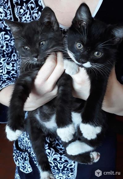 Отдам котят в добрые руки. Фото 1.