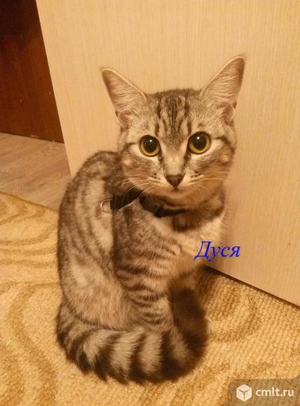 Молодая кошка Дуся - в хорошие руки. Фото 1.