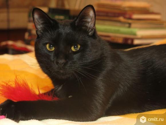 Бриллиантовый черный котик в добрые руки. Фото 1.