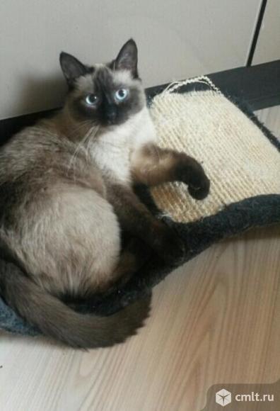 Шикарный котик в добрые руки. Фото 1.