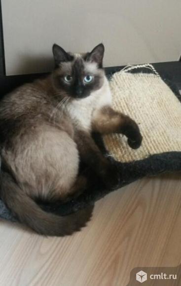Шикарный котик в добрые руки. Фото 2.