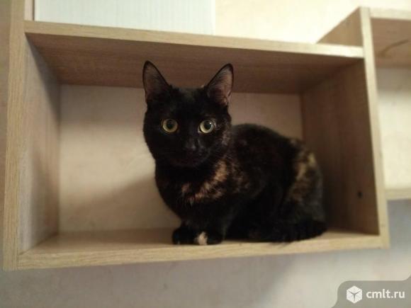 Кошка в горошек. эта редкость будет вашей. Фото 1.