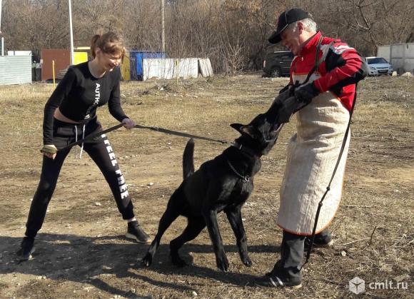 Обучение собак в Воронеже. Фото 2.