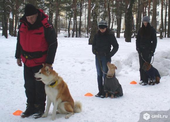 Обучение собак в Воронеже. Фото 9.