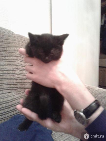 Черный  котенок  в  ответственные  руки. Фото 1.