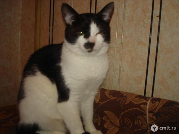 Молодой котик Тимоша - в ответственные любящие  руки. Фото 3.